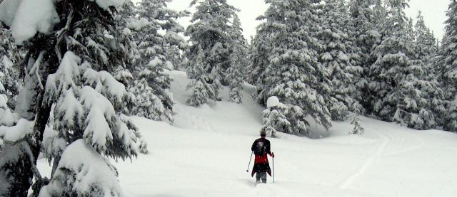 skiing (traversing) in deep snow